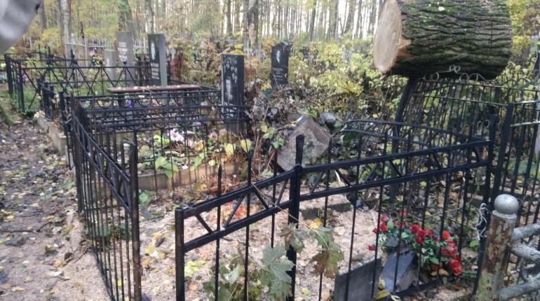 В Петербурге благоустройство Серафимовского кладбища дало обратный эффект – рабочие, которые пилили деревья, обрушили стволы прямо на могилы. Несколько надгробий и оград сломаны.