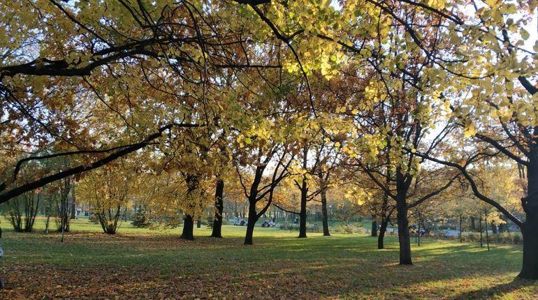 Агротехнический период в Петербурге продлится до 2 ноября. Такое распоряжение дал комитет по благоустройству города.