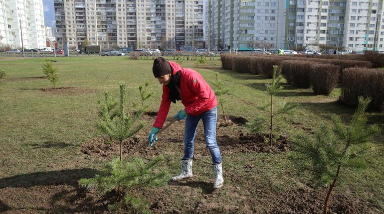Петербург готовится ко Дню благоустройства. В субботу, 20 октября в разных районах Северной столицы пройдут десятки экологических акций.