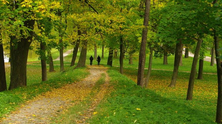 Колесов: средняя температура в октябре побила вековой рекорд