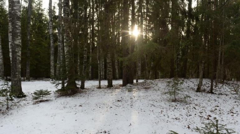 В Токсово в 2019 году пройдет фестиваль зимнего спорта. Планируется Токсовский лыжный марафон, детские старты, музыкальная и развлекательная программа для гостей и участников.