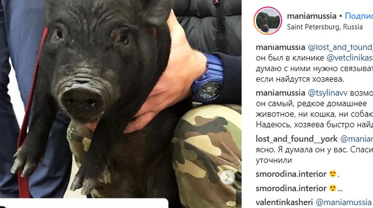 По Приморскому району бегает свинка