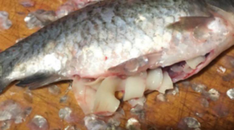 У «Приморской» торгуют рыбой с ленточными червями