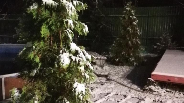Жители Ленобласти выкладывают в соцсети фотографии первого снега. Белоснежным улицам радуются жители Луги. Петербуржцы же, несмотря на обещания синоптиков, пока