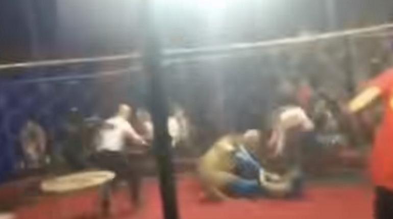 В интернете опубликовали видеозапись нападения львицы на трехлетнюю девочку в Краснодарском крае. Девочку госпитализировали в реанимацию.