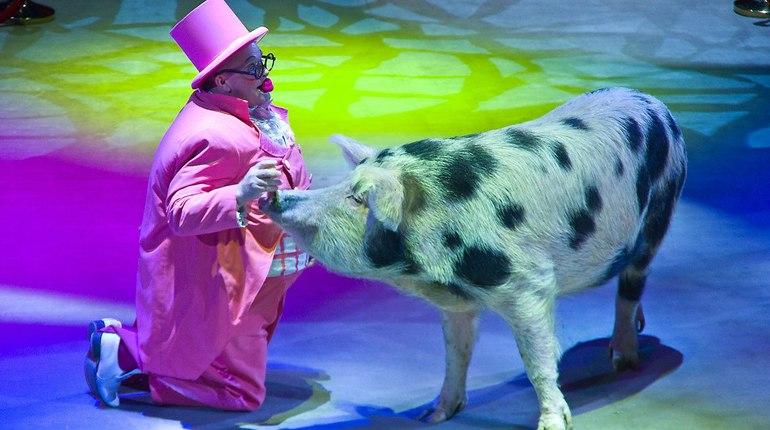 Фестиваль лучших клоунов мира перенесли из Екатеринбурга в Петербург. Он пройдет на сцене цирка на Фонтанке с 6 по 9 декабря, сообщает пресс-служба Росгосцирка.