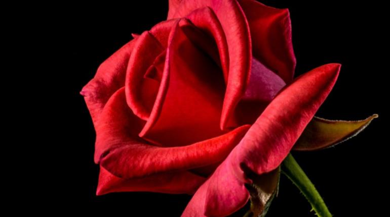 Труп мужчины среднего возраста нашел прохожий на улице Волхова ночью 9 ноября. Причины его смерти выясняются. Из особых примет отметили татуировку в виде розы на плече.