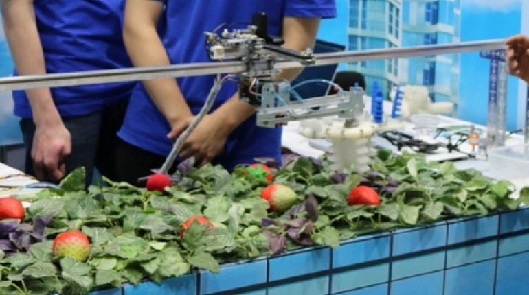 Школьники в Петербурге создали робота, выращивающего клубнику