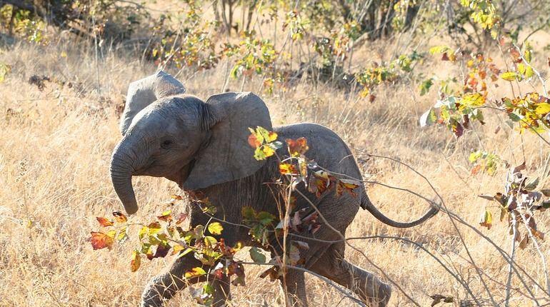 Взбесившиеся слоны «рассердились» на туристов из РФ, погиб немец
