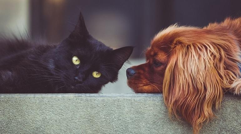 Оказалось, что арендодатели в Петербурге самые нетолерантные к домашним животным, по сравнению с другими городами. Так, по данным экспертов