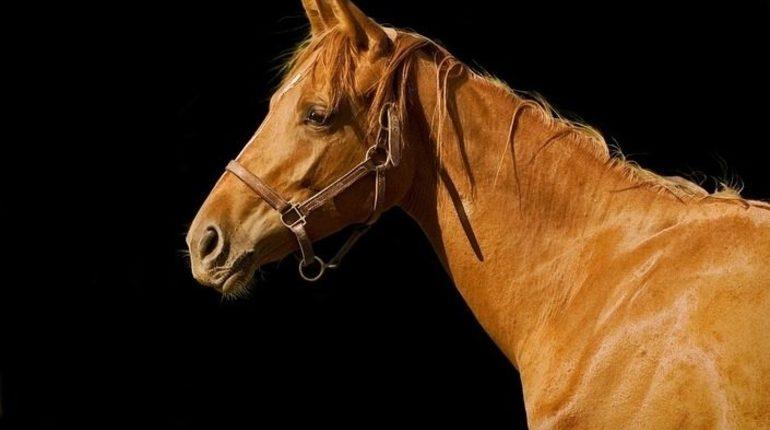 Пассажирский автобус в Башкирии наехал на табун лошадей, погибли четверо животных.