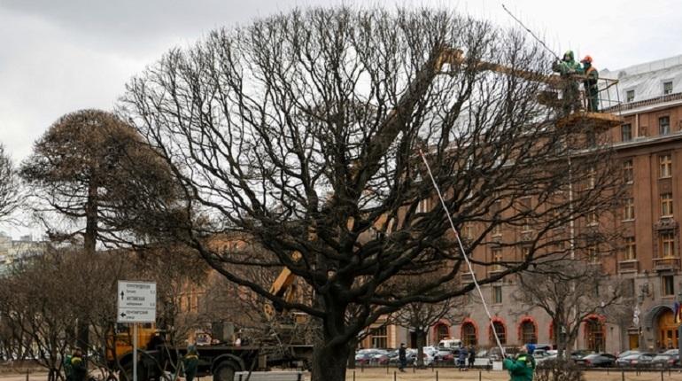 В Петербурге создадут общественную карту деревьев
