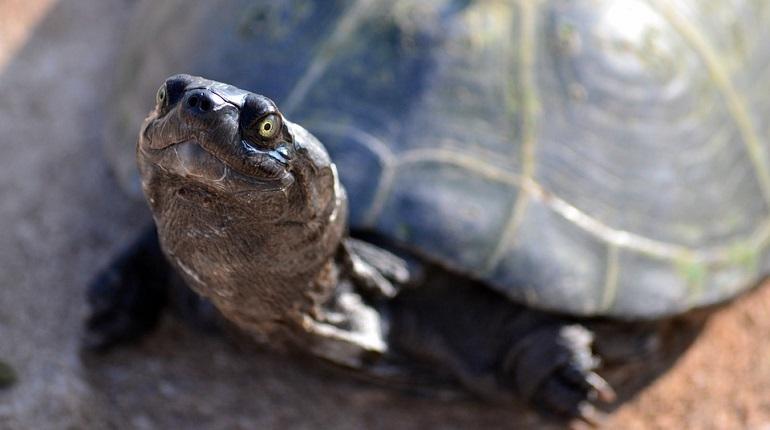 В Петербурге открылся ХII международный фестиваль дикой природы «Золотая черепаха». Посетить выставку и мероприятия в рамках фестиваля можно в пространстве «Этажи» до 13 января 2019 года.
