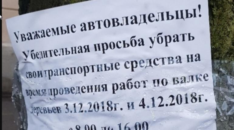 Петербуржцы сообщили об очередной вырубке деревьев на Васильевском острове в Петербурге. Жертвой коммунальщиков пали якобы больные вязы.