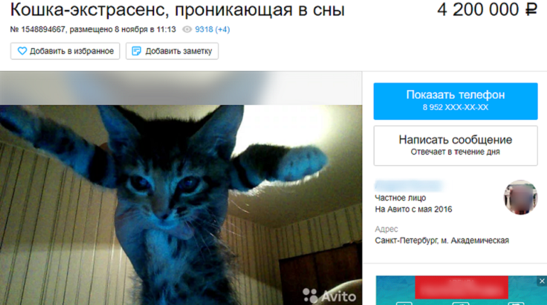 Кошку, которая проникает в сны, исцеляет и исполняет желания, продают в Петербурге. Продавец уверен, что его питомица - экстрасенс и просить за беспородное, но волшебное, по его мнению, животное 4 млн 200 тыс. рублей.