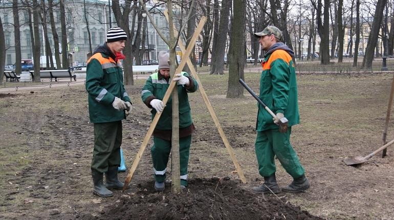 В этом году в садах и парках Петербурга было высажено почти 12 тысяч деревьев. Об этом сообщает комитет по благоустройству города.
