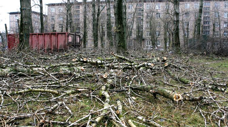 Депутаты в Петербурге проголосовали за увеличение штрафов за вырубку деревьев и уничтожение кустарников без необходимого разрешения и информационного щита. Для юридических лиц они могут вырасти до 500 тыс. рублей.