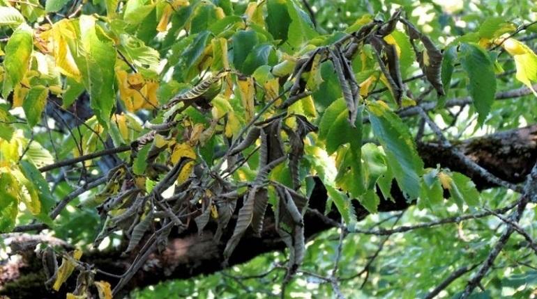 Инициатива по посадке 200 кленов вместо вырубленных больных вязов в сквере на улице Типанова не у всех вызвала восторг. Так, активисты считают, что если бы за деревьями ухаживали все это время, то не пришлось бы уничтожать целый сквер.