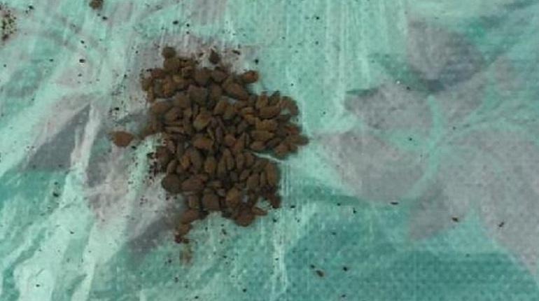 В «Кресты» пытались пронести наркотический кофе