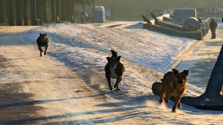 В Петербурге предложили вернуть на улицы бродячих собак после стерилизации