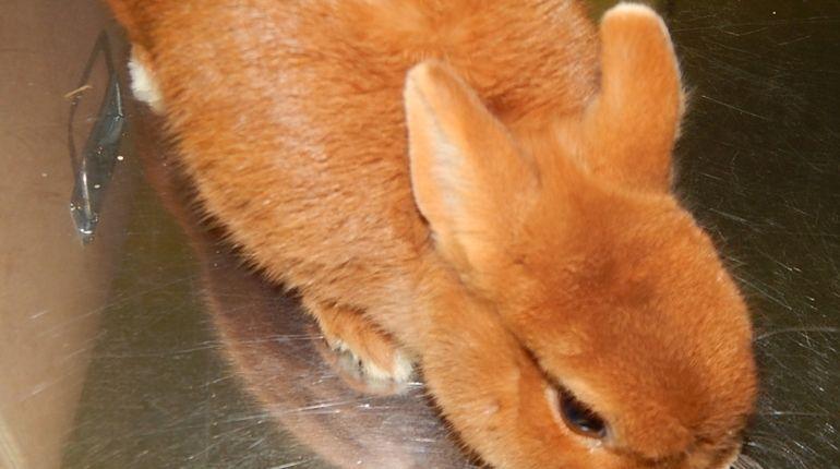 «Непривитые» немецкие кролики не смогли попасть в Петербург