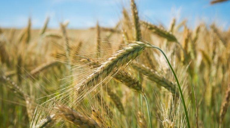 Путин назвал шикарным сегодняшний урожай ипризвал следить заценами